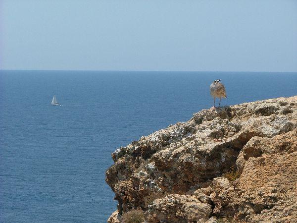 Una excursion por Formentera nos permite contemplar paisajes inolvidables. Esta isla, por sus reducidas dimensiones, puede ser recorrida en unas horas alquilando un scooter o bicicleta.