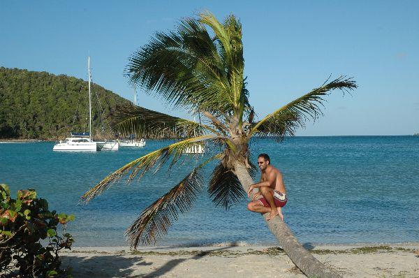 Lo que parece que sólo existe en los escaparates de las agencias de viajes nos rodea aquí por todos los lados... ¿No hemos visto todos esta palmera en alguna parte? Pues está en Mayreau, Grenadinas...